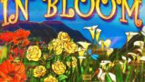 Автомат In Bloom в казино Поинт Лото